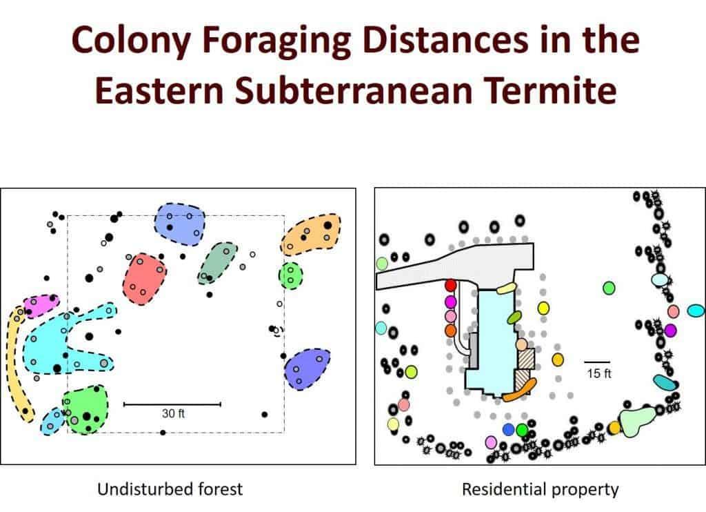 Termite Colony Distribution
