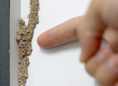 detecting termites
